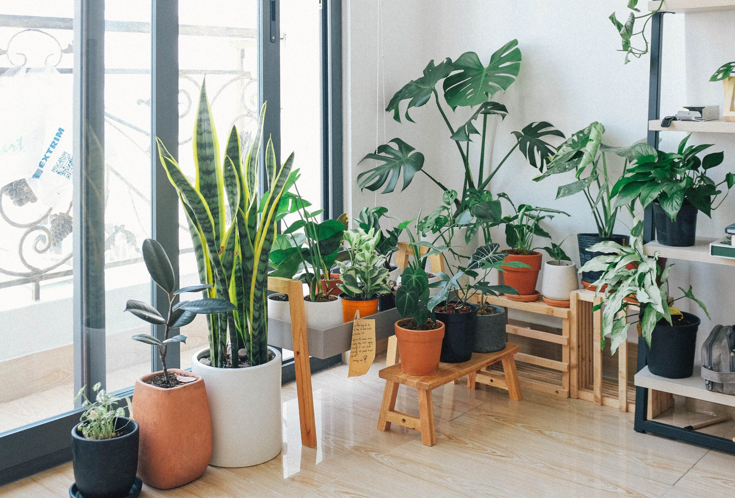 Beginners Guide To Houseplants